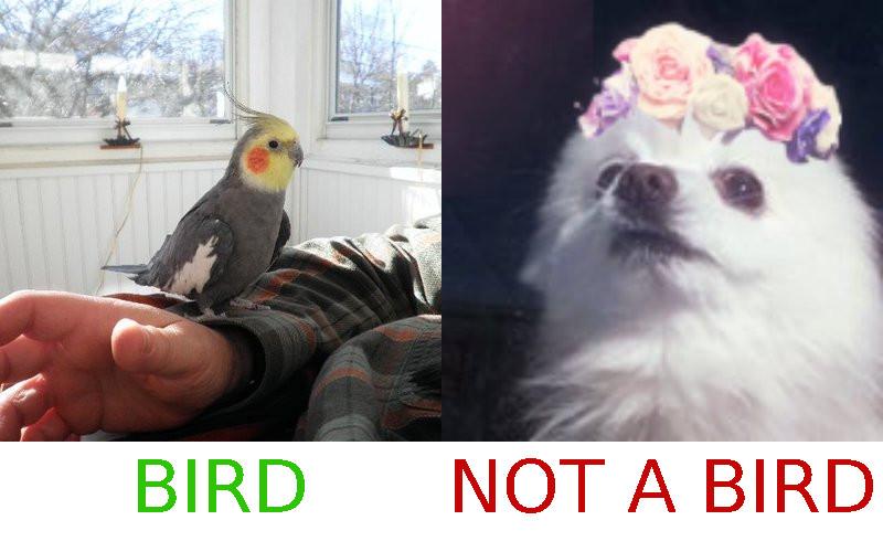 bird-nobird